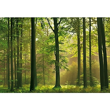 Ideal Decor Autumn Forest Wall Mural, 100