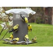 Birds Choice 3 Quart Forever Bird Feeder