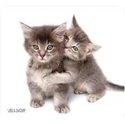 Allsop® NatureSmart™ Mouse Pad, Kittens
