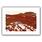 ArtWall 'Red Ice on Beach I' by Linda Parker Photographic Print on Canvas; 28'' H x 20'' W
