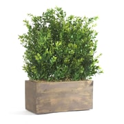 Dalmarko Designs Small Table Top Boxwood in Wood Planter