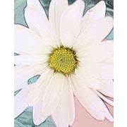 Graffitee Studios Floral/Nature Painted Daisy Graphic Art on Wrapped Canvas