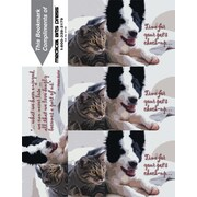Photo Image 3-Up Laser Postcards; Time of for Pet Check