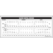 """Veterinary Examination Medical Labels; Canine Dental Record, White, 3-1/4x8"""", 250 Labels"""