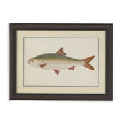 Bassett Mirror Donovan Antique Fish II Framed Graphic Art