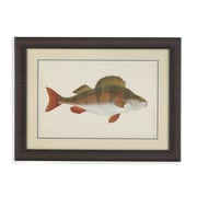 Bassett Mirror Donovan Antique Fish I Framed Graphic Art