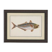 Bassett Mirror Donovan Antique Fish III Framed Graphic Art