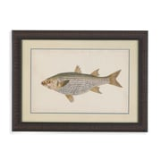 Bassett Mirror Donovan Antique Fish IV Framed Graphic Art