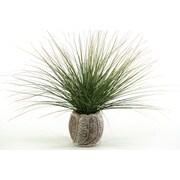 D & W Silks Onion Grass in Round Ceramic Pot