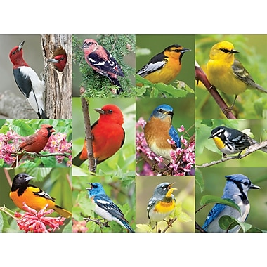 Springbok Birds Of A Feather Rectangular Jigsaw Puzzle, 500 Pieces