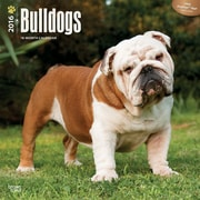2016 Browntrout Publishers Dog Breeds12x12 Square Bulldogs (9781465040503)