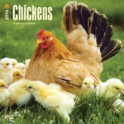 2016 Browntrout Publishers Domesticated Animals12x12 Square Chickens (9781465040619)