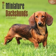 "2016 BrownTrout Publishing Dog Breeds 12"" x 12"" Square Dachshunds, Miniature (9781470000000)"