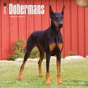 2016 Browntrout Publishers Dog Breeds12x12 Square Dobermans (9781465040824)