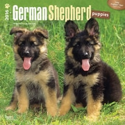 """2016 BrownTrout Publishing Dog Breeds 12"""" x 12"""" Square German Shepherd Puppies (9781470000000)"""