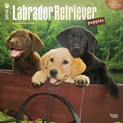 "2016 BrownTrout Publishing Dog Breeds 12"" x 12"" Square Labrador Retriever Puppies (9781470000000)"