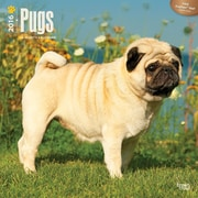 "2016 BrownTrout Publishing Dog Breeds 12"" x 12"" Square Pugs (9781470000000)"