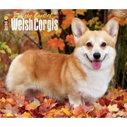 "2016 BrownTrout Publishing Dog Breeds / For the Love of Welsh Corgis 12"" x 14"" Deluxe (9781470000000)"