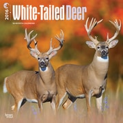 """2016 BrownTrout Publishing Wildlife 12"""" x 12"""" Square White-Tailed Deer (9781470000000)"""