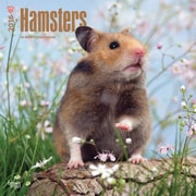 """2016 BrownTrout Publishers Domesticated Animals 12"""" x 12"""" Square Hamsters (9781470000000)"""