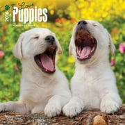 "2016 BrownTrout Publishing Dogs 12"" x 12"" Square Puppies, I Love (9781470000000)"
