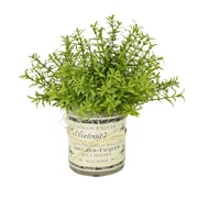 Creative Displays, Inc. Rosemary French Label Pot