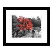 PrestigeArtStudios Autumn's Maple Framed Photographic Print