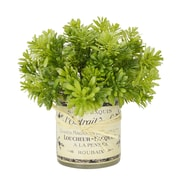 Creative Displays, Inc. Jade Plant in French Label Decoupage Glass Vase