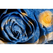 PrestigeArtStudios Starry Night Rose Graphic Art