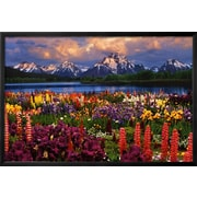 Art 'Grand Teton, Wyoming' 25 x 37 (921377)