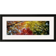 Art Panoramic Images 'Colorful Trees in Fall, Autumn, Low Angle View' 15 x 31 (4348504)