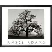 Art Ansel Adams 'Oak Tree, Sunset City, California, 1932' 26 x 32 (8867344)