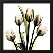Art.com Albert Koetsier 'Crystal Flowers X-ray, Tulip Bouquet'  14 x 14 (8867381)