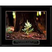 Art 'Determination: Little Pine' 24 x 30 (9029676)