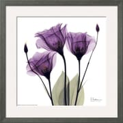 Art Albert Koetsier 'Royal Purple Gentian Trio' 16 x 16 (9088579)