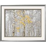 Art Andrew Geiger 'Fall Birch' 25 x 31 (9361862)
