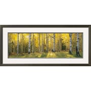Art Panoramic Images 'Aspen Trees in Coconino National Forest, Arizona, USA' 20 x 44 (9361863)