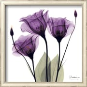 Art.com Albert Koetsier 'Royal Purple Gentian Trio'  13 x 13 (9370254)