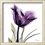 Art Albert Koetsier 'Royal Purple Parrot Tulip' 13 x 13 (9370255)
