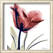 Art Albert Koetsier 'Single Tulip in Red' 13 x 13 (9370297)