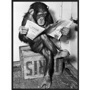 Art Bettmann 'Chimpanzee Reading Newspaper' 25 x 19 (9535584)