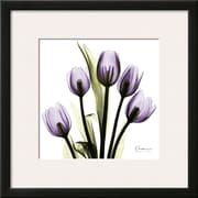 Art Albert Koetsier 'Tulip in Purple' 19 x 19 (10186472)
