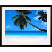 Art.com  'Beach and Palm, Seychelles Island'  31 x 39 (10196591)