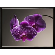 Art.com  'Water Drops on Orchids'  20 x 26 (10439392)