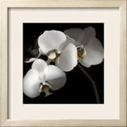 Art Michael Freeman 'White Phalaenopsis Orchids' 25 x 25 (10662168)