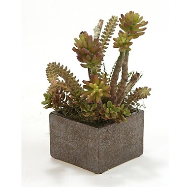 Distinctive Designs Faux Succulents w/ Desert Boxwood Floor Plant in Planter