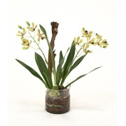 Distinctive Designs Waterlook Vanda Orchid w/ Plant in Cylinder Vase