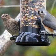 Droll Yankees Clever Clean 2 Port Sunflower Bird Feeder