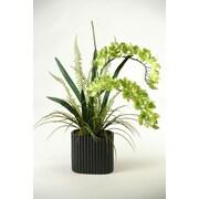 D & W Silks Orchids in Oval Ceramic Planter