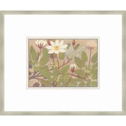 Melissa Van Hise Alpine Flora XII Framed Graphic Art